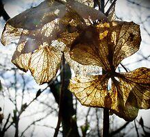 Flower by AdelinaKrupski