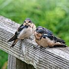 Three Little Birdies by James  Birkbeck Animals