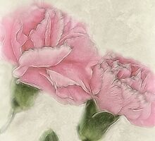 Pink Carnations 3 Color with Sepia by Christopher Johnson