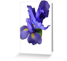 Incredible Iris Greeting Card