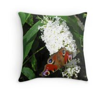 European peacock butterfly (Inachis io) on white butterfly bush (buddleia) Throw Pillow