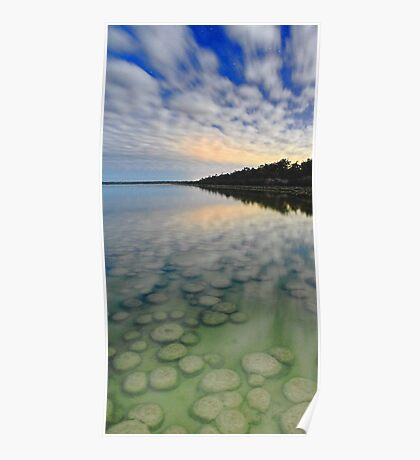 Lake Clifton Thrombolites Under Moonlight  Poster