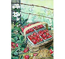 Strawberries in a Basket Photographic Print