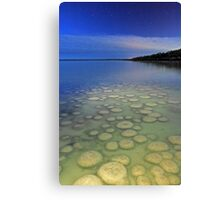 Lake Clifton Thrombolites Under Moonlight  Canvas Print