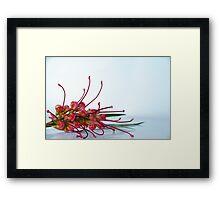 Australian flora Framed Print
