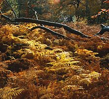 Golden Ferns, Epping Forest, UK by Gary Rayner