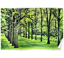 Tree Alley at St. James Poster