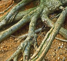 Roots 2 by Gary Rayner