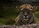 Jaguar in the Water by Sandy Keeton