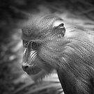 Baby Baboon by Mark Elshout