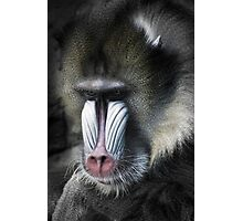 Mummy Baboon Photographic Print