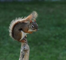 Feisty Little Red Squirrel by Lynda   McDonald