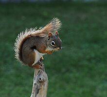 Feisty Little Red Squirrel by Lynda   McDonald