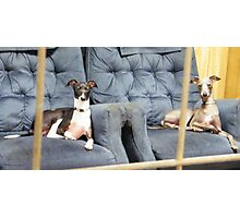 Two Poochies Photographic Print