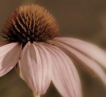 shy blush by Tania Palermo