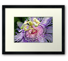 Beauty Of The Passion Framed Print