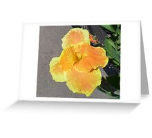 Beautiful Orange n Yellow Flower Greeting Card