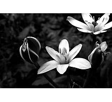 Late Summer Light Photographic Print