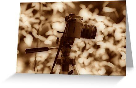 Camera Love by Fotography by Felisa ~