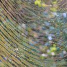 Golden Web by ©Dawne M. Dunton