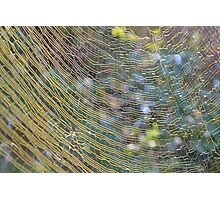 Golden Web Photographic Print