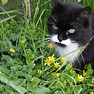 Alfie in the undergrowth by stellelove
