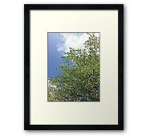 Spring time bloom  Framed Print