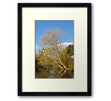 Willow in the Water Framed Print