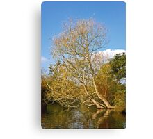 Willow in the Water Canvas Print