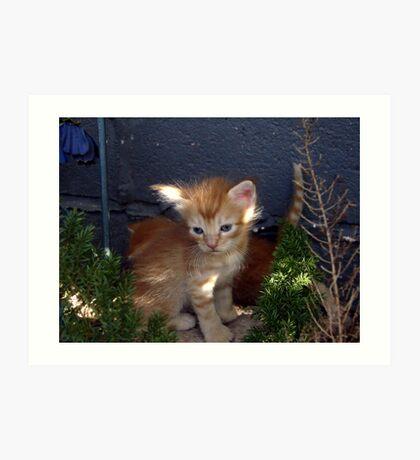 Orange Tabby Kitten Art Print