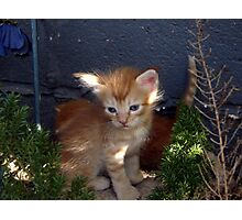 Orange Tabby Kitten Photographic Print