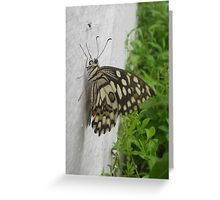 Do you want more space? Greeting Card