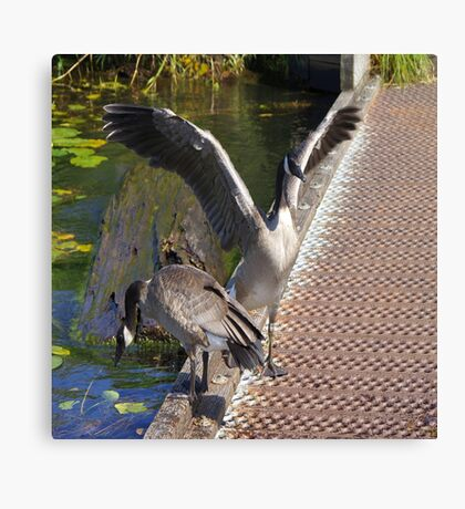 Geese Flapping Canvas Print