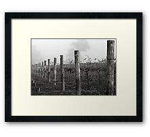 Foggy Vineyard Framed Print