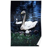 Swan Mother Poster