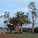 Dusk,Rowsley Valley by Joe Mortelliti