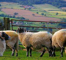 Moorish Sheep by IngridSonja