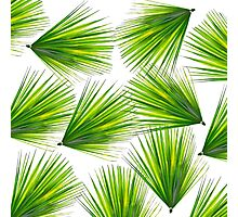 Tropical Exotic Hawaiian Palm Fronds Photographic Print