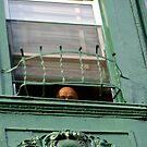 Peeping out by rochelle