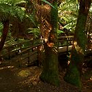 Maits Rest,Otway Ranges by Joe Mortelliti