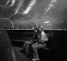 Brighton Aquarium by Tony Hadfield