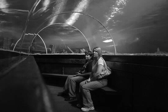 Brighton Aquarium by Tony Hadfield