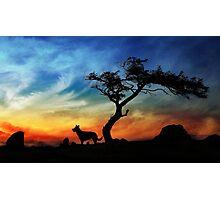 Dog Rocks Photographic Print
