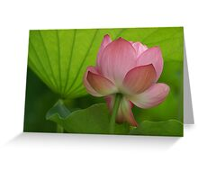 Rainy Day Lotus Greeting Card