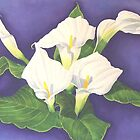 Calla Lillies by JANET SUMMERS