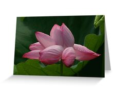 Wind Swept Beauty Greeting Card