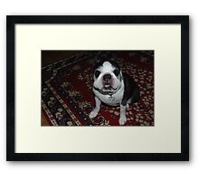 """""""Seriously, does my face look funny to you""""? Framed Print"""