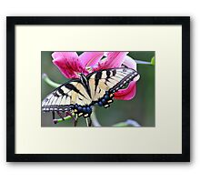 Lily Nectar Luncheon Framed Print
