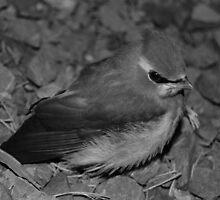 Lil' Bird by Nick McGuire