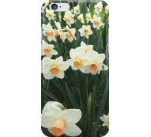 Daffodils, NYC iPhone Case/Skin